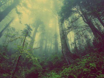 Foto_foresta_cover